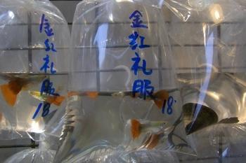 June 2011香港 058 (640x427).jpg