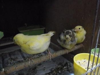 birds1 006 (640x480).jpg