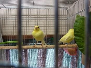 birds1 012 (640x480).jpg