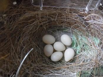 birds1 019 (640x480).jpg